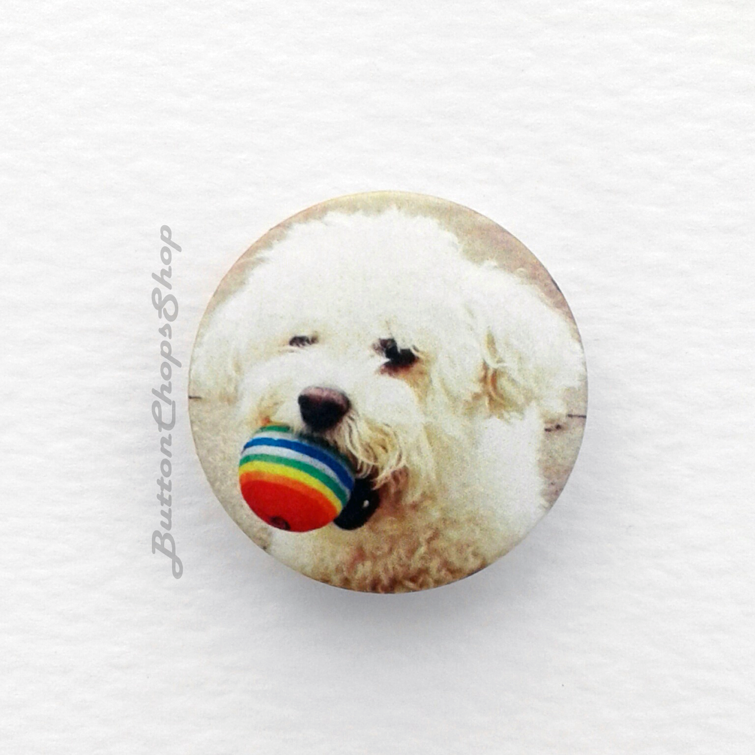 Bichon ball